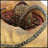 Review_BattleAtTheSarlaccPitTLC006
