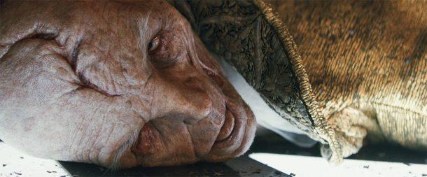 Snoke is dead